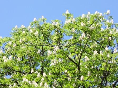 ゲステニェ 花盛り