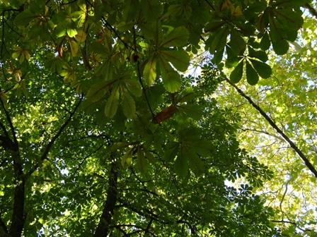 ゲステニェの葉