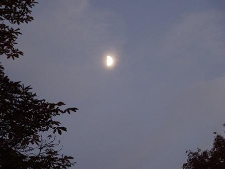 上弦の月 ズーム