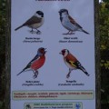 野鳥の立て札