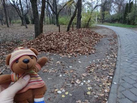 新しい枯れ葉の山