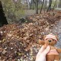 落ち葉が山 11月23日 2