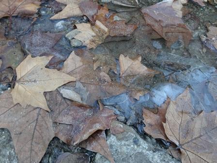 11月28日 初氷