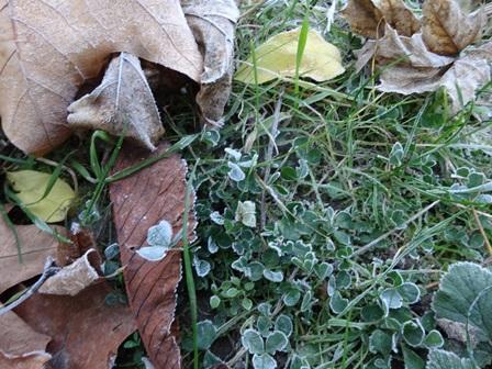 11月28日 初霜