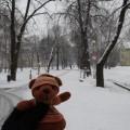 1月29日 雪の並木道