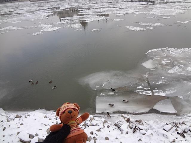 ドナウ川の氷