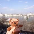 2013年4月1日 ドナウ川