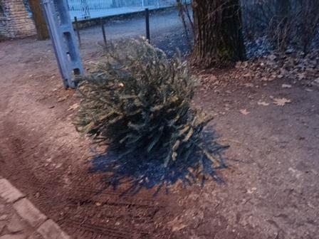 クリスマスツリーだった。
