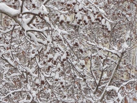 去年の雪景色