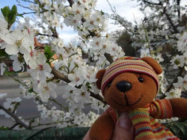 桜もどき 駅