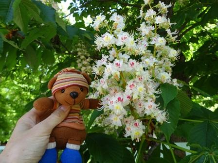 ゲステニェの花とシャインくん
