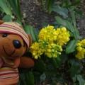シャインくんと黄色い花