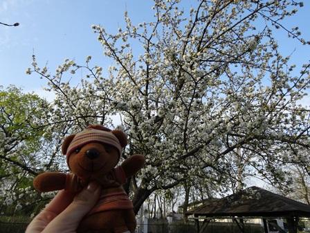 春のチェレスニェ