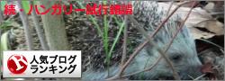 人気ブログランキング・ハリネズミ