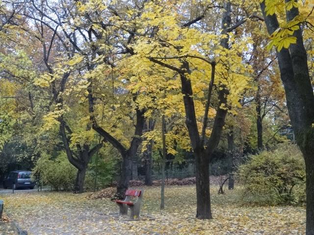 広場の黄色