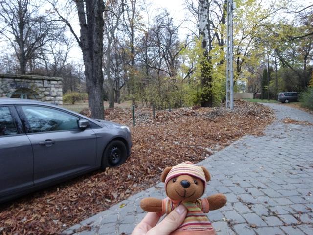 枯れ葉と車
