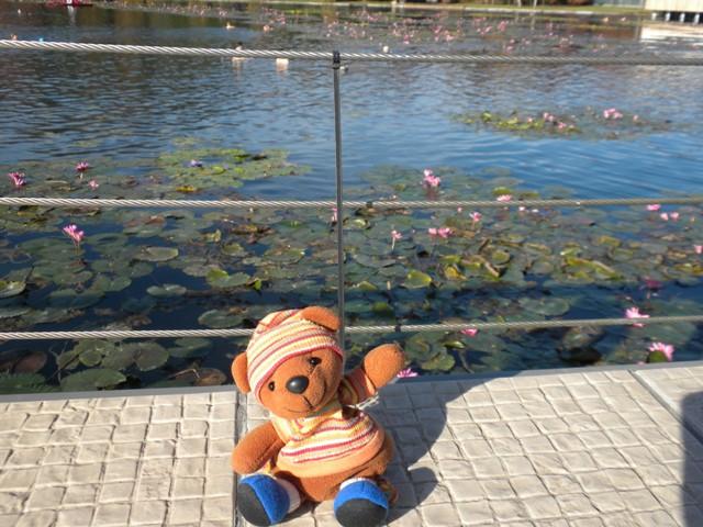 ヘーヴィーズ湖