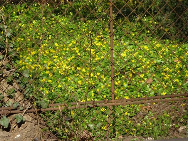 黄色いの3