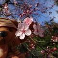ディースシルヴァの花