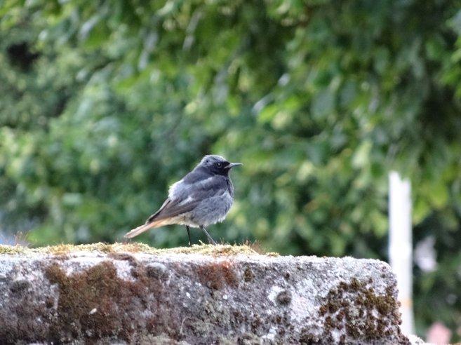 アルザスの鳥3