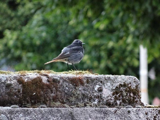 アルザスの鳥2