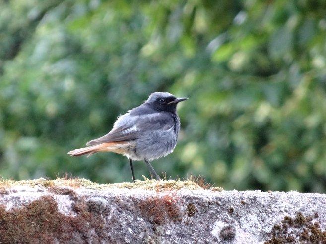 アルザスの鳥