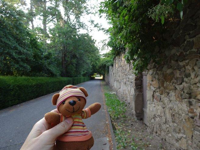 正門へ向かう林道