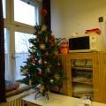 203教室のツリー