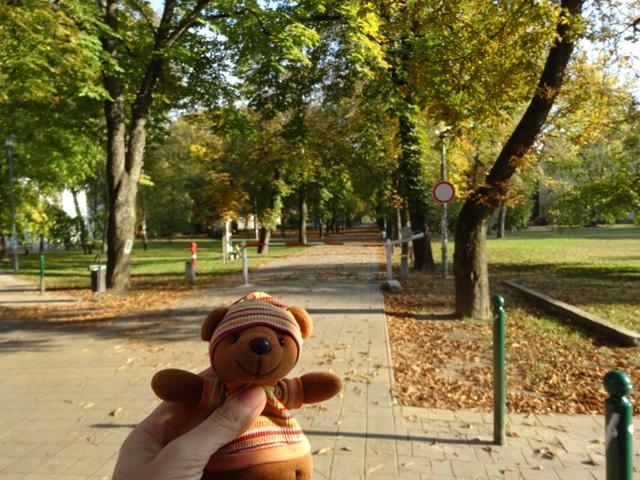 秋の並木道