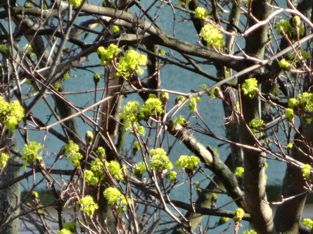 地味に咲く黄色い花1