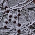 雪の日の妖精