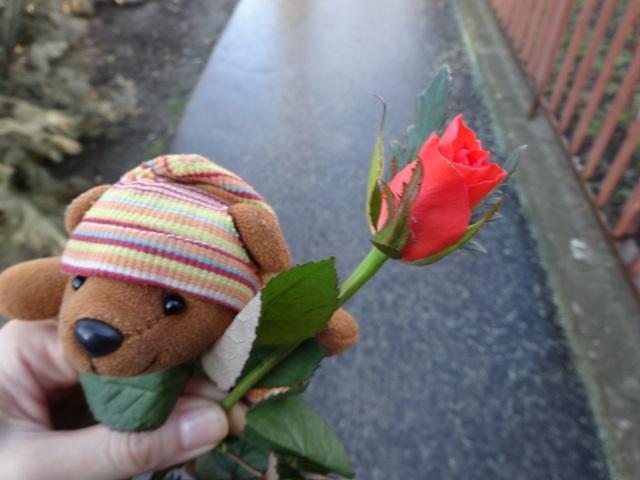 婦人デイの薔薇