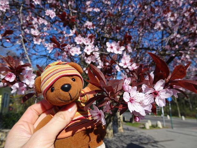 春のディースシルヴァ