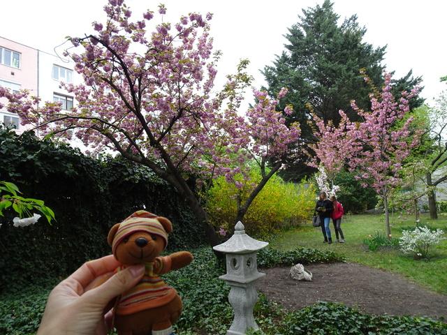 日本庭園祭り